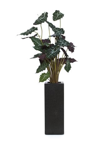 csm alocasia 110cm ee94bf9a10 dekohaus innenbegr nung und aussenbegr nung mit exklusiven. Black Bedroom Furniture Sets. Home Design Ideas