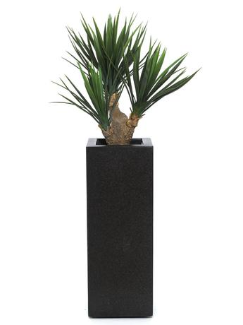 csm baby yucca palme 1767e95510 dekohaus. Black Bedroom Furniture Sets. Home Design Ideas